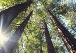 Pensiero verticale: una visione più ampia della realtà